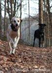 Warum Hunde Jogger und Radfahrer jagen