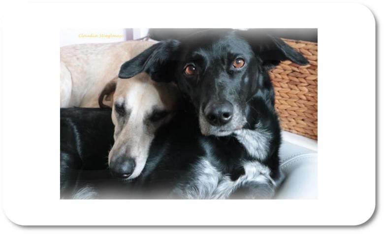 Peanut und Musha sind die Tanten der kleinen Vitesse und vier und neun Jahre alt.