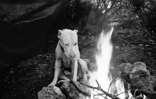 Rocco and the fire