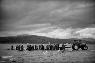 Once the tide rises, a tractor helps transport all the shellfish collected by the fisherwomen of the Noia brotherhood