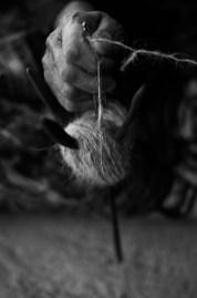 Kamyar-Weavers-DO1010335