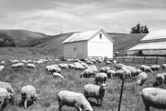 sonoma-county-farm