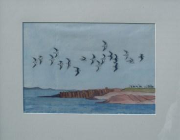 Måger ved grønlandsk næs, 32x46 cm