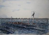 Skarv, Vrøj 1959, 50x35 cm