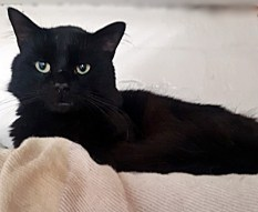 'Axel' 3 to 4 year old male. Axel had been taken to a vets after he was hurt in an accident but nobody came to claim him so he is now with us looking for a new home. He has had an injury to his jaw repaired but this should be OK in time.
