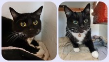 'Hally' & 'Sal' 3 year old brother & sister. These two are looking for a home together due to allergies in their previous home. They are still a little nervous yet so can't be homed with under 10's.