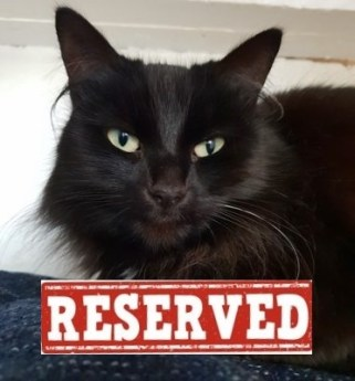 'Missy' 6 year old Female Black DLH. Missy is looking for a new home as her owner is moving home and can't take her with them.