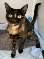 'Phoebe' 3 and a half year old Female. Phoebe is looking for a home as her owner was moving house and couldn't take pets. She will come to greet you and enjoys playing but can get a little carried away at times.