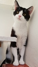 'Ruby' 1 year old female. Ruby is looking for a home as her owner's landlord would not allow her to stay. She looks a little shy but is quite friendly when you meet her.