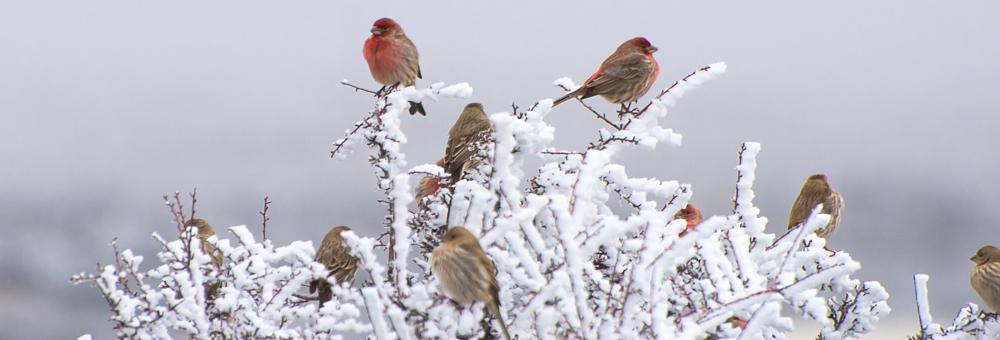 A Quiet Winter Wilderness in Washington State