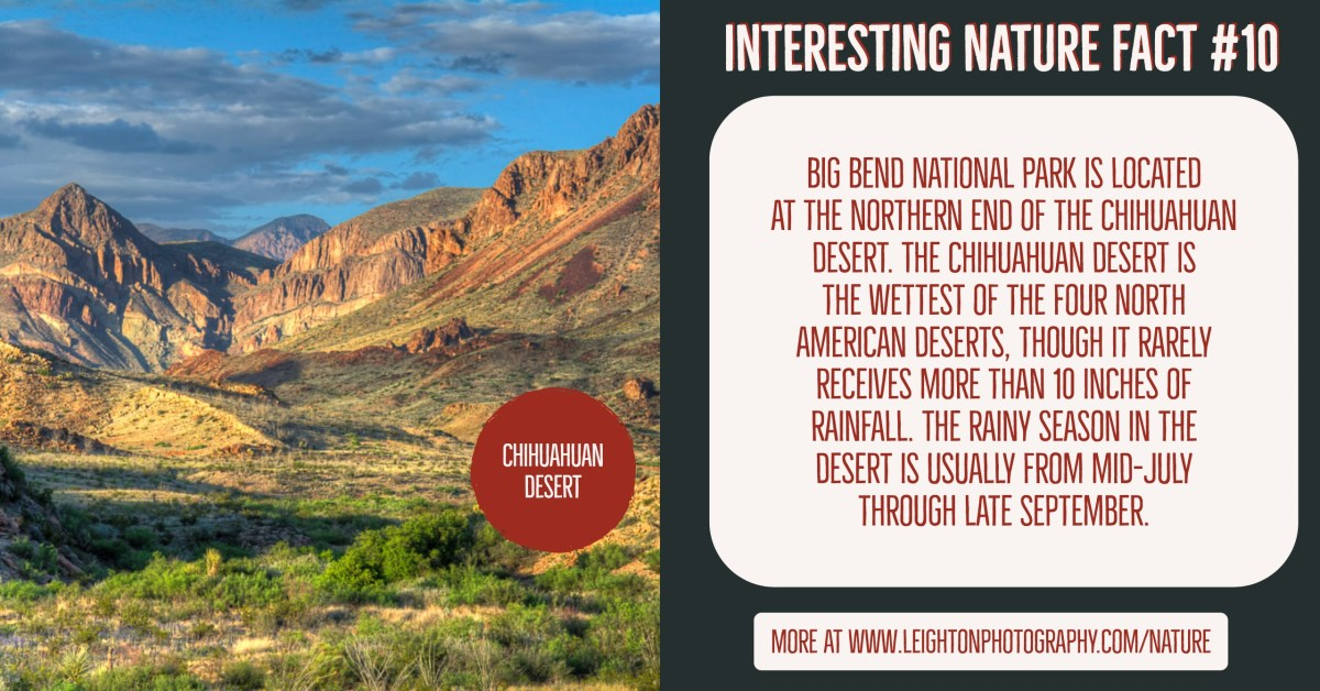 Interesting Nature Facts #10 – Chihuahuan Desert
