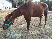 Bubba- Permanent Resident In Need Of Sponsors