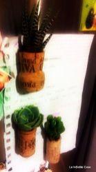 Vere piante Grasse in Tappi di sughero con magnete - www.leinsolitecose.com (6)