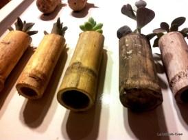 Piante Grasse in Canna con Magnete