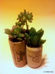 Tris di piante grasse in tappo di sughero