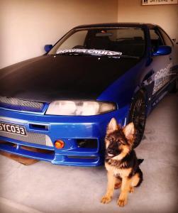 german-shepherd-long-coat-cute-girl-next-to-her-car