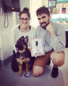 german-shepherd-long-coat-female-puppy-winning-Puppytraining-olympic-gold-medal