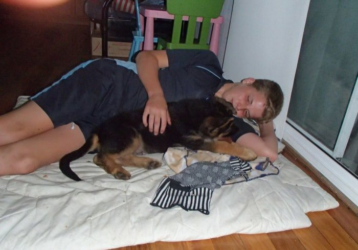 german-shepherd-puppy-sleeping-with-family