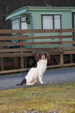 Pet poll - dog on holiday park