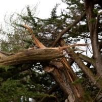 VENT VIOLENT : quelques dégâts hier dans le nord Isère