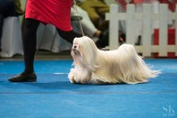 Best in Show competition