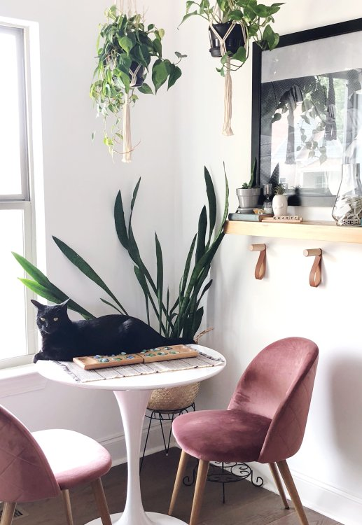 best way to get rid of cat hair in house