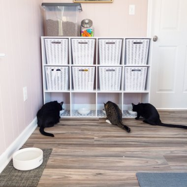 cat feeding area with storage cube shelving