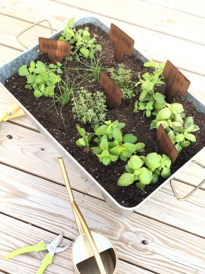 galvanized beverage tub for herb garden