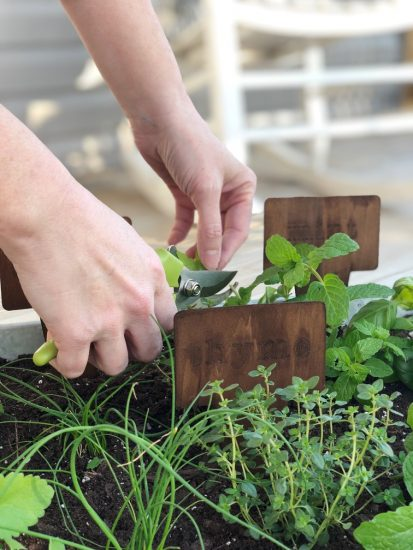 portable herb garden for patio on a budget