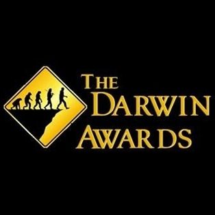 Darwin le loser : perroquet intelligent