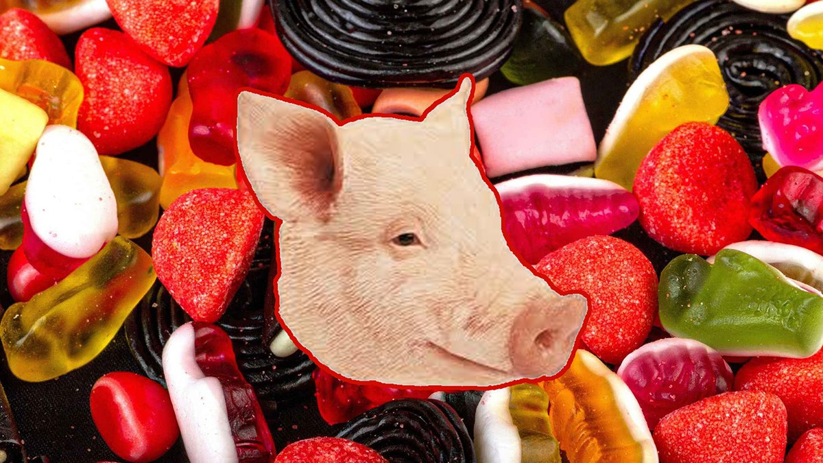 Des restes d'animaux dans les bonbons à la gélatine