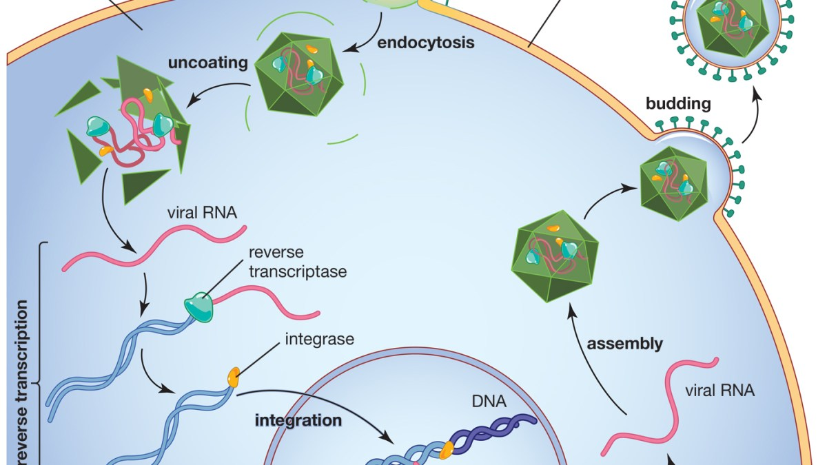 Vaccin Pfizer : l'Inserm ment concernant l'ARN messager !