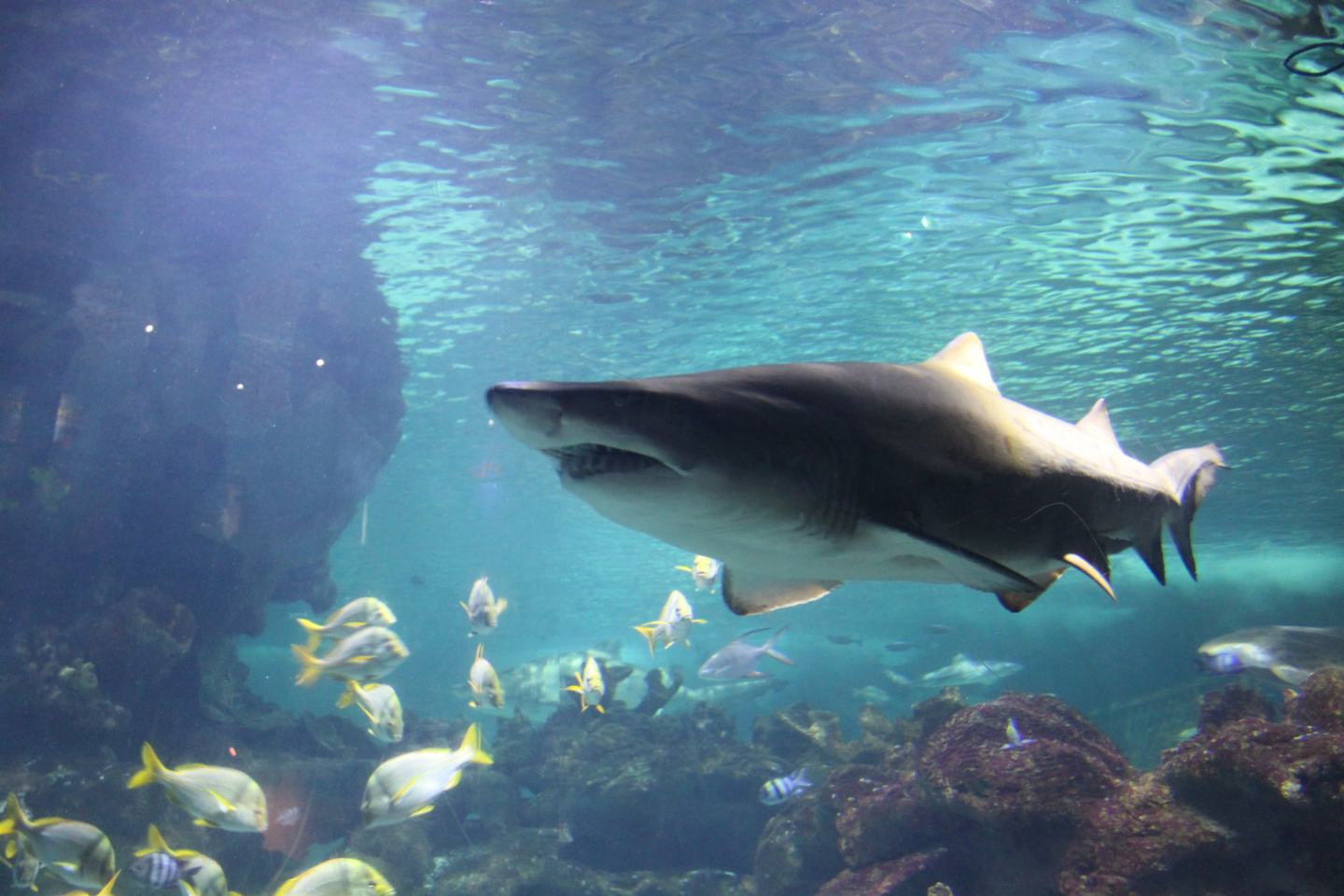 Blue Planet Aquarium: A Splashtacular Underwater Adventure: