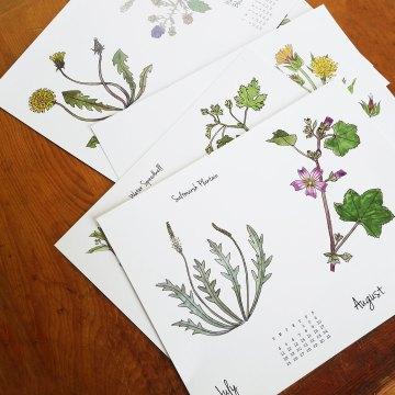 2021 Weeds & Wildflowers calendar by Lellobird