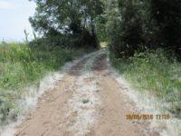 Pineta Aldobrandini : sentiero