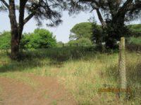 Villa di Procoio: reticolato e cancello