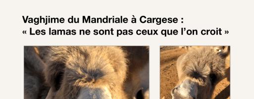 Retrouvez l'interview de Vaghjime dans Corse-Matin