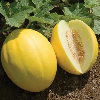 melon canari jaune