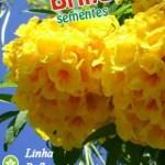 Sementes de Ipe de jardim