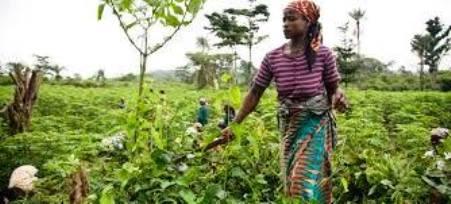 gouvernance foncière femmes et jeunes