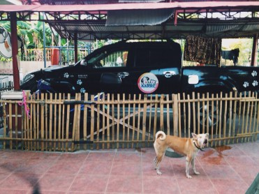 dogs of aklan animal rescue and rehabilitation center