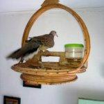sangkar burung rotan (2)