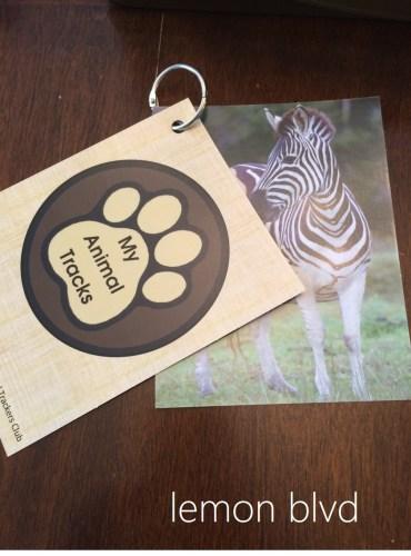 Animal Trackers - Zebra Card - lemon blvd