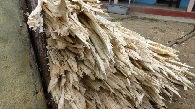 biomasse-jpg