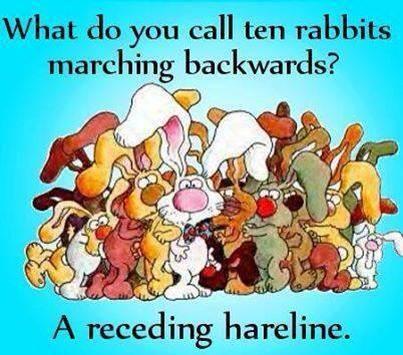receding hareline