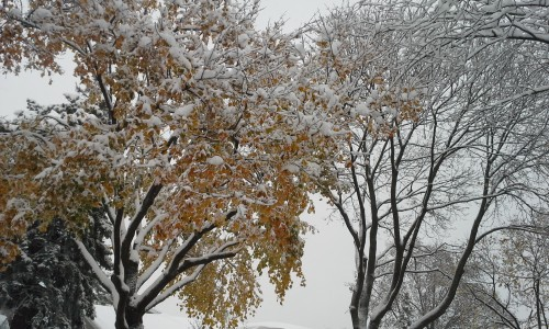 Fall tree with snow