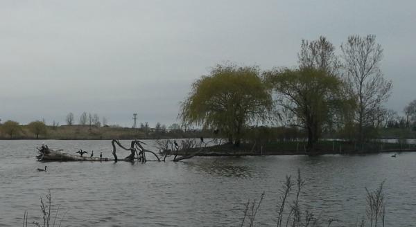 Glenview Lake
