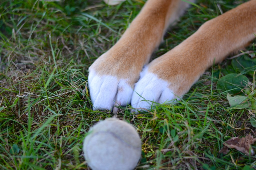 The cutest paws ever!