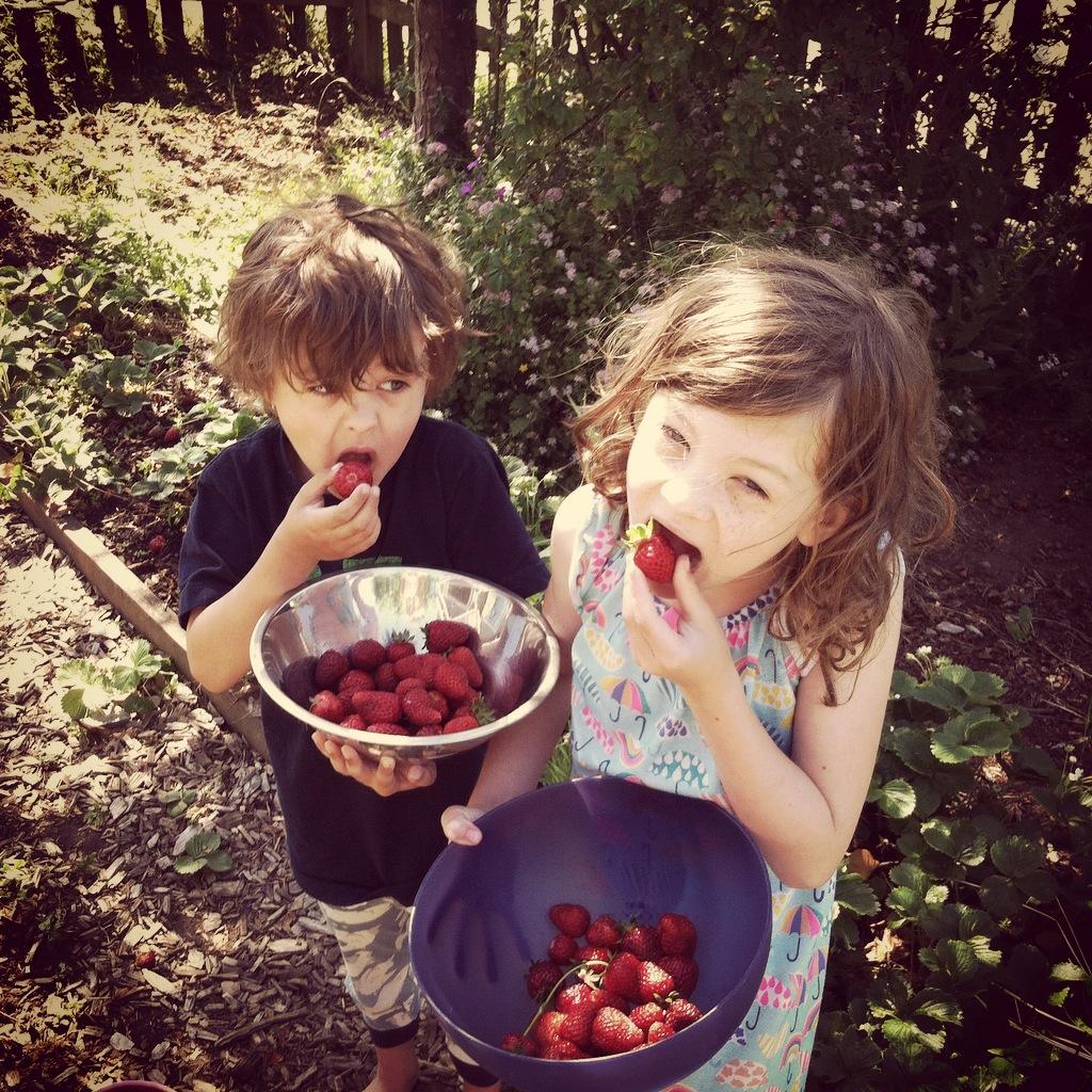 Lily & Jasper Strawberries