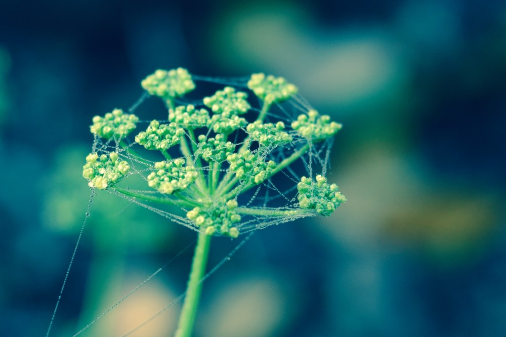 Parsley Cobweb in Chrome